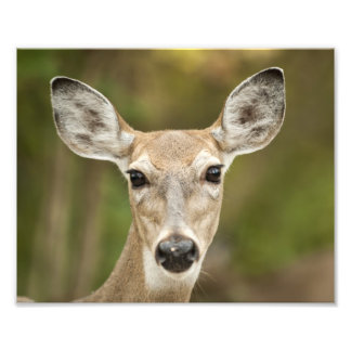 White Tailed Deer Photo