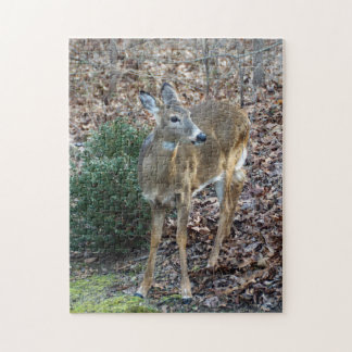 White-Tailed Deer Puzzle