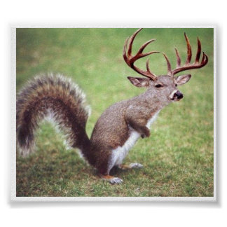 White Tailed Deer Squirrel Poster