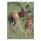 White-tailed deer with fawn card