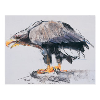 White tailed Sea Eagle 2001 Postcard