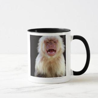 White-throated capuchin (Cebus capucinus) Mug