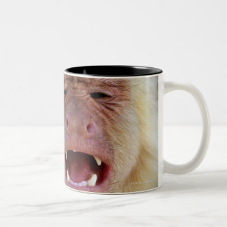 White-throated capuchin (Cebus capucinus) Two-Tone Coffee Mug