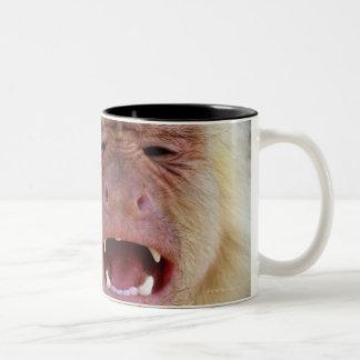 White-throated capuchin (Cebus capucinus) Two-Tone Mug