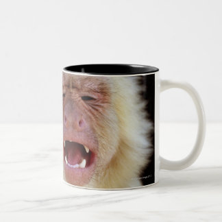 White-throated capuchin (Cebus capucinus) with Two-Tone Coffee Mug