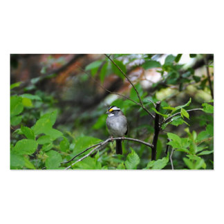 White Throated Sparrow Pack Of Standard Business Cards