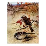 White-Throated Sparrows and Fall Leaves Postcard
