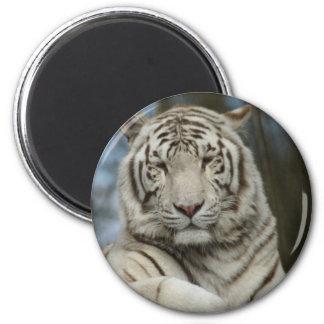 White Tiger 6 Cm Round Magnet