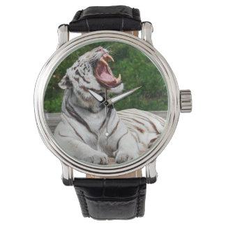 White Tiger, Bengal Tiger Watch
