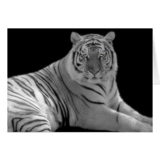 White tiger Birthday Greeting Card