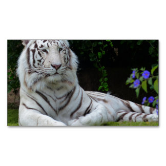 white tiger cat stripes feline wild magnetic business cards (Pack of 25)