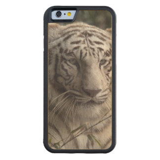 White Tiger Close-up Carved Maple iPhone 6 Bumper Case