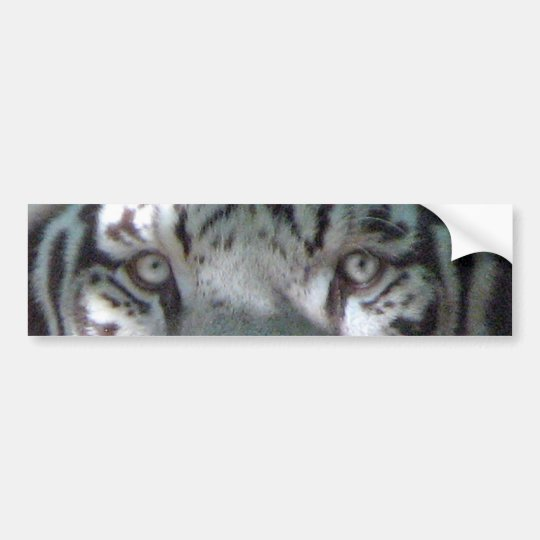 White Tiger Eyes Bumper Sticker