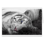 White tiger greeting card