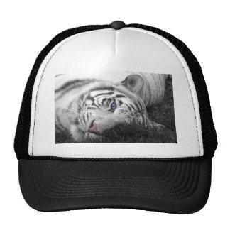 White tiger hats