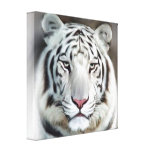 WHITE TIGER II GALLERY WRAPPED CANVAS