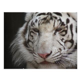 White Tiger Invitation