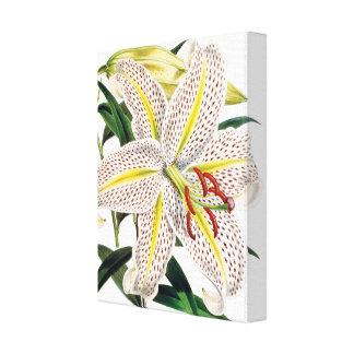 White tiger lily premium botanical canvas