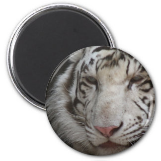 White Tiger Magnet Magnet