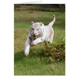 White Tiger Note Card