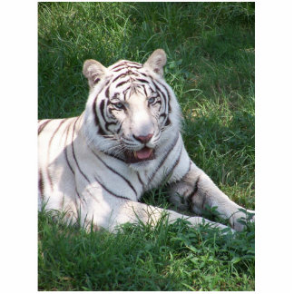 White tiger on green grass vertical frame picture photo cutout
