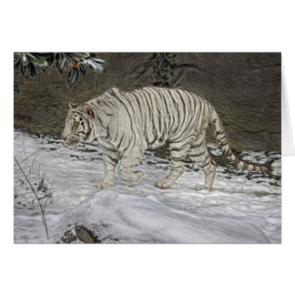 White Tiger Stalking in Snow Holiday Card