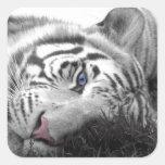 White tiger sticker