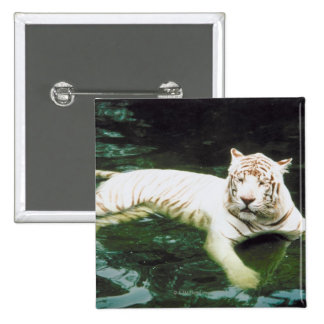 White Tiger Swimming Peacefully 15 Cm Square Badge