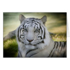 White Tiger (v2) Greeting Card Personalise
