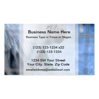 white tiger yawn blue side large cat animal image pack of standard business cards