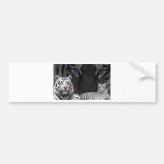 White Tigers Bumper Sticker