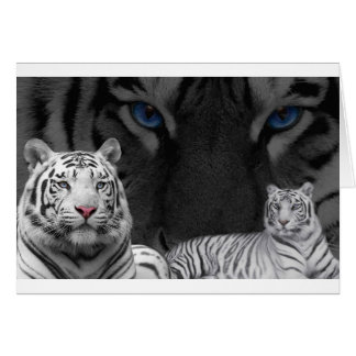 White Tigers Card