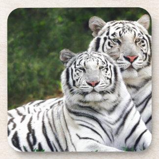 White Tigers Coaster