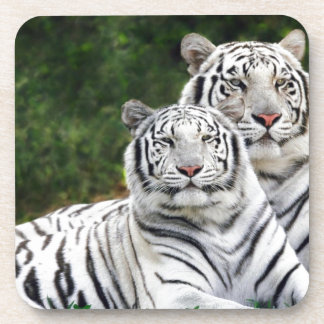 White Tigers Drink Coaster