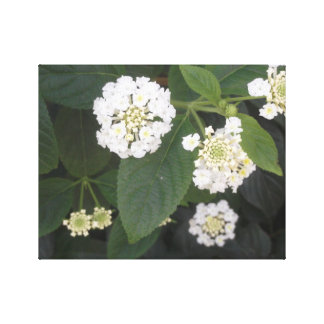 white tiny flowers canvas print