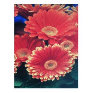 White Tipped Flower Postcard