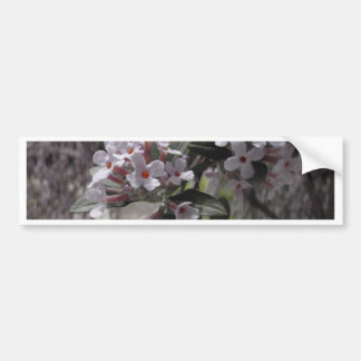 White Tree Blossom With A Hint Of Pink Bumper Sticker