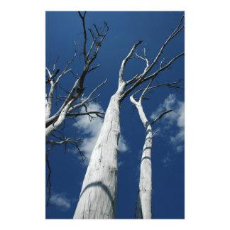 White trees against blue sky photo art