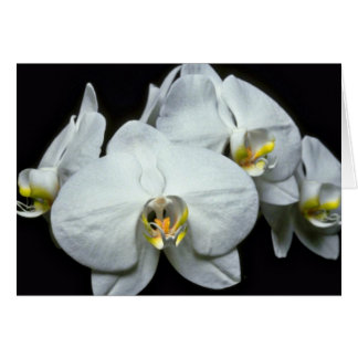 White Tropical Flower flowers Greeting Card