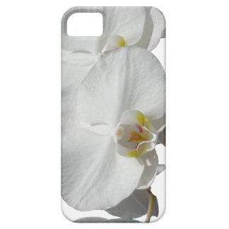 White Tropical Orchids iPhone 5 Cases