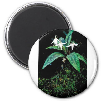 White trout lily magnet