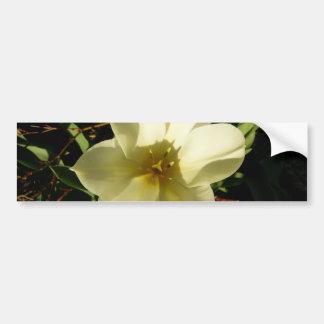 White Tulip Car Bumper Sticker