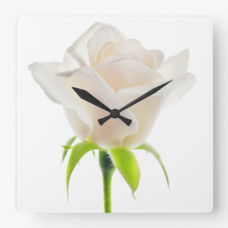 White Tulip Flower Clear Background Floral Square Wall Clock