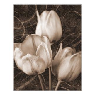 White Tulip Flowers Sepia Black Background floral Photo Art