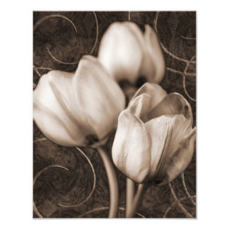 White Tulip Flowers Sepia Black Background floral Photo Print