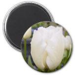 White Tulip Fridge Magnets