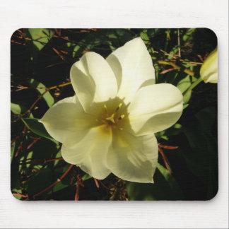 White Tulip Mousepads