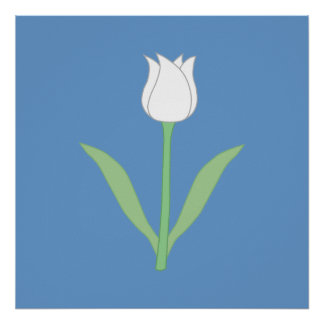 White Tulip on Blue Posters