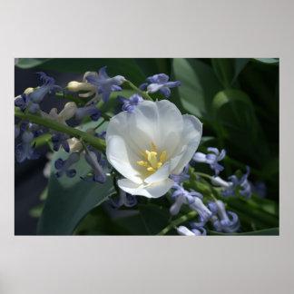 White Tulip Print