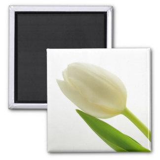 White Tulip Square Magnet